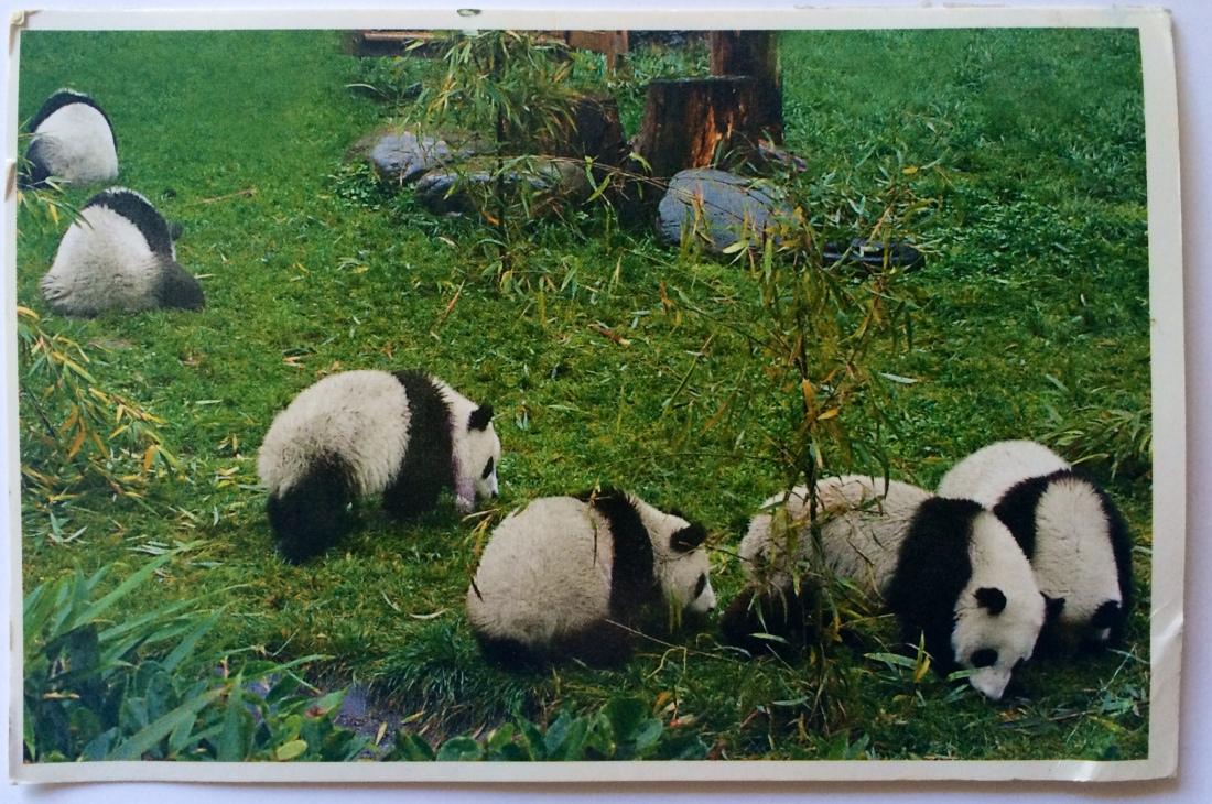 Pandas!